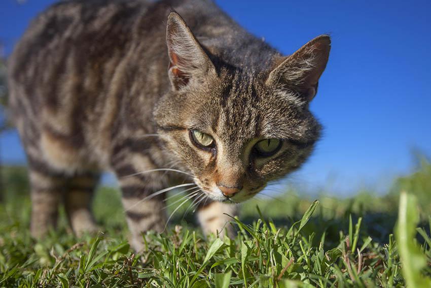 Hausarrest für Katzen?