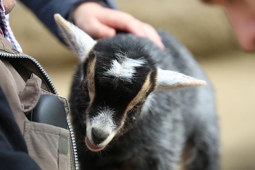 Kinderpatenschaft übernehmen - tierische Erlebnisse verschenken
