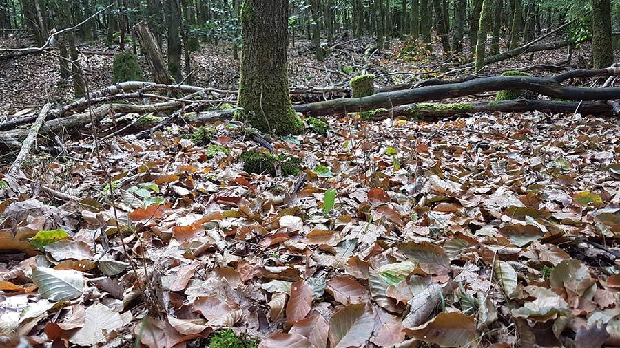 Schäden im Stadtwald von Bad Honnef