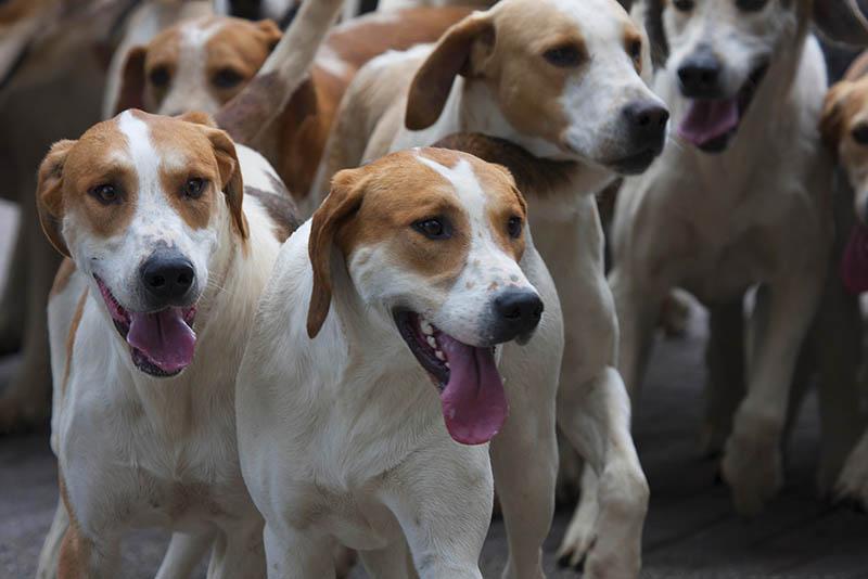 Illegalen Tiertransport auf A 3 gestoppt