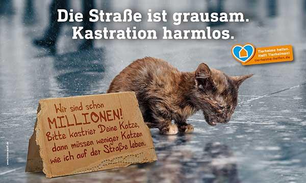 Braucht die VG Hachenburg eine Katzenschutzverordnung?