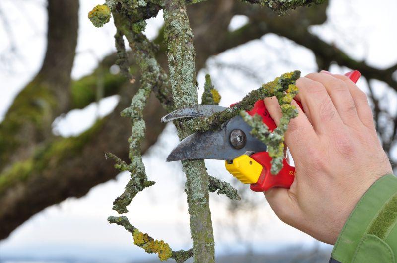 Obstbäume fachgerecht schneiden