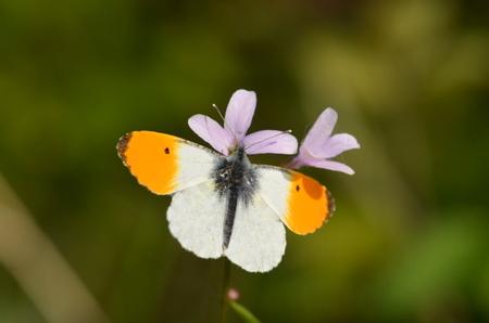 Der Naturschutzbund (NABU) Rhein-Westerwald weist auf die Bedeutung der Weg- und Straßenränder als Rückzugsorte für teils gefährdete Tier- und Pflanzenarten hin. (Foto: Heinz Strunk)