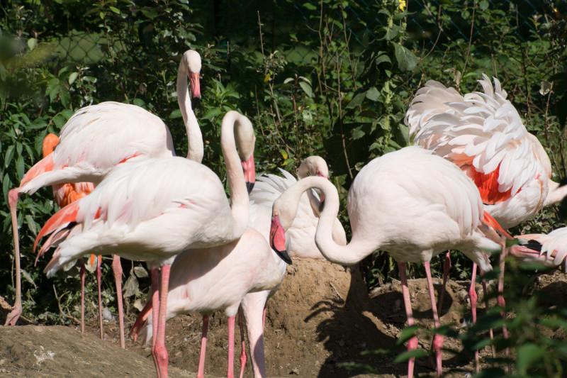 Rosafarbene Vögel im Zoo Neuwied