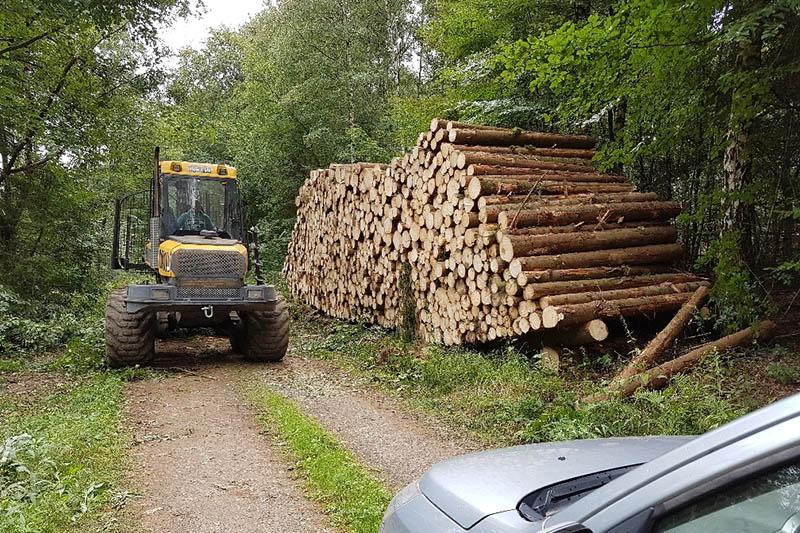 Ein frisch gerückter Holzpolter mit Nadelholz-Abschnitten. Allerdings gibt es auch kleine Mengen für Endverbraucher. Foto: Frank Krause