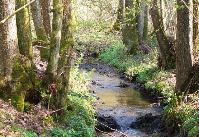 Natur-Projektwoche im Hassel-Wald