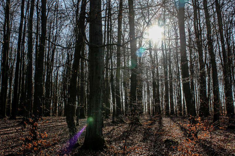 Naturschutzverbände BUND und NI fordern Wald-Erhalt am Nauberg