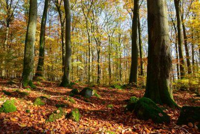 Naturwaldreservat Nauberg. Foto: Harry Neumann/Naturschutzinitiative e.V. (NI)