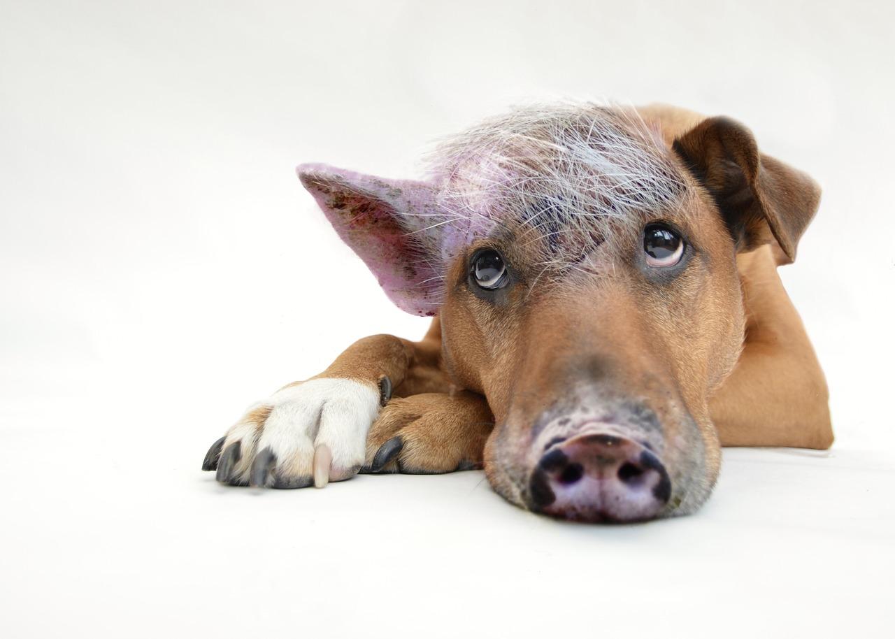 Nicole nörgelt... über Corona-Trägheit und Schweinehunde