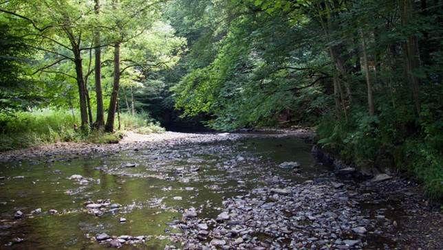Fachseminar Gewässerschutz der Universität Koblenz an der Nister