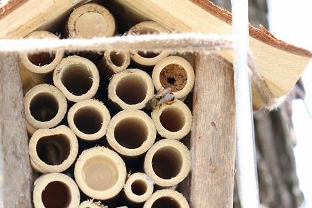 Infoabend zum Klimawandel und Insektensterben im Westerwald