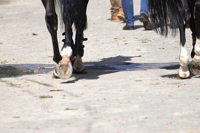 Freiwilliges Jahr mit Pferden in Windhagen