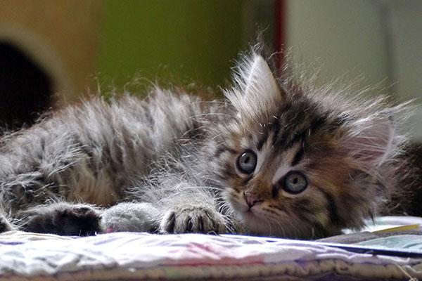 Katzenhilfe Neuwied nimmt Babys kostenlos auf