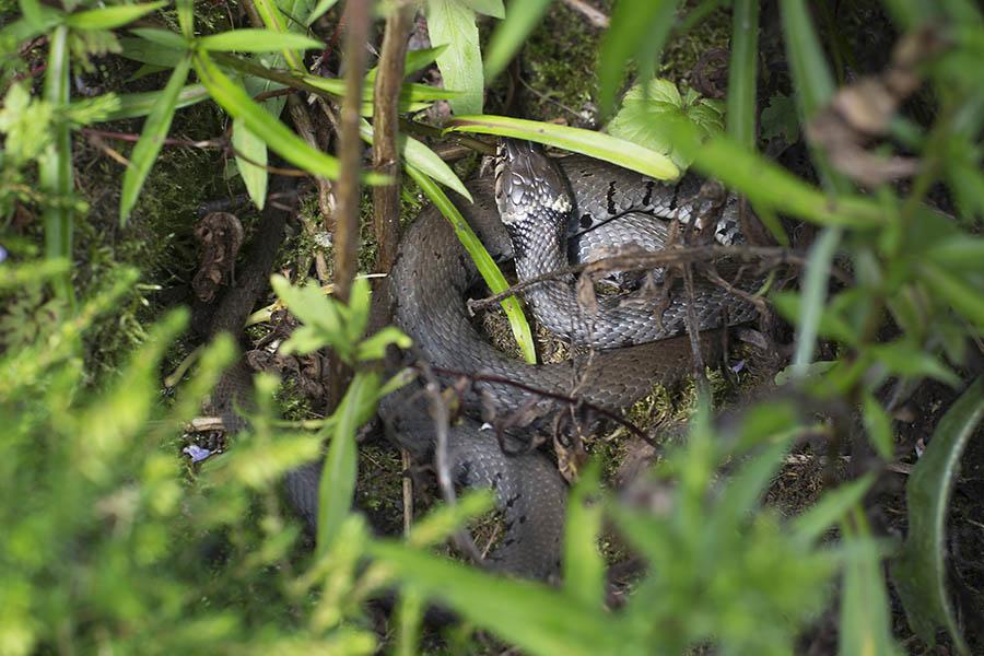 Keine Angst vor Schlangen im Garten!
