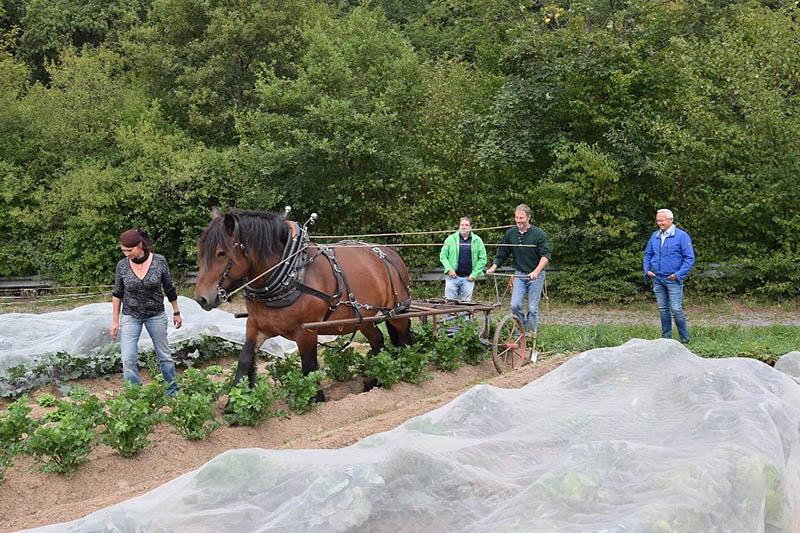 Erfolgreiches Gemüseanbauprojekt sucht größeren Wirkungskreis