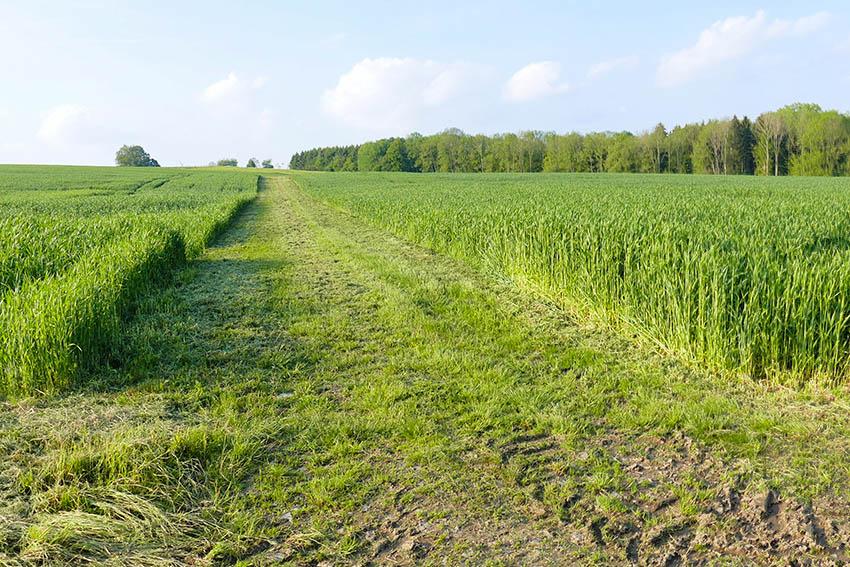 NI kritisiert rabiate Saumpflege im FFH-Gebiet bei Herschbach