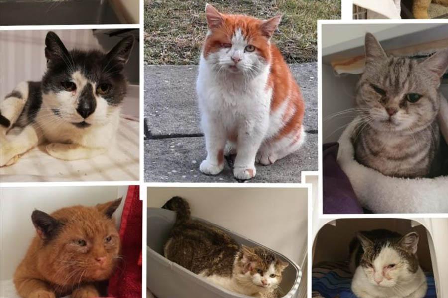 Das Martyrium der unkastrierten Katzen und Kater