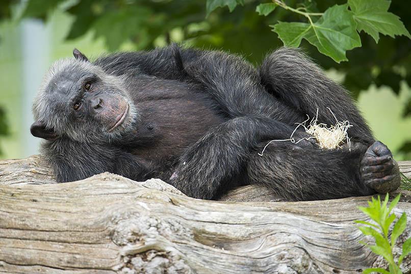 Zoo Neuwied ist wieder geöffnet