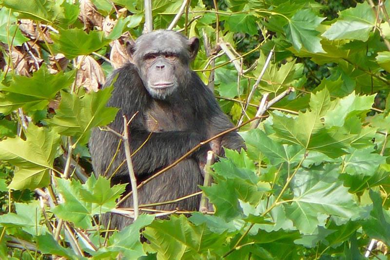 Foto: Zoo Neuwied