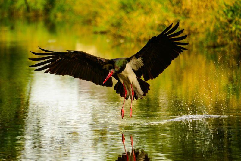 Vogelquartett »Fliegende Edelsteine«
