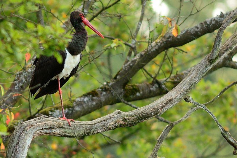 NABU l�dt zu Thementag �Faszination Wald� ein