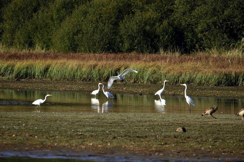 Vogelzug live am Wiesensee erleben
