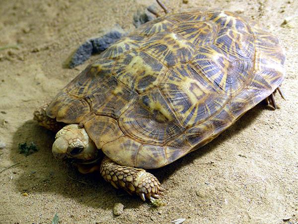 Gefährdete Schildkrötenart im Zoo Neuwied eingezogen