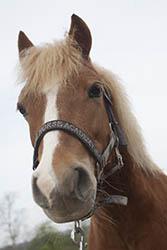 Pferde-Messe mit Show, Training und Sozialaspekt