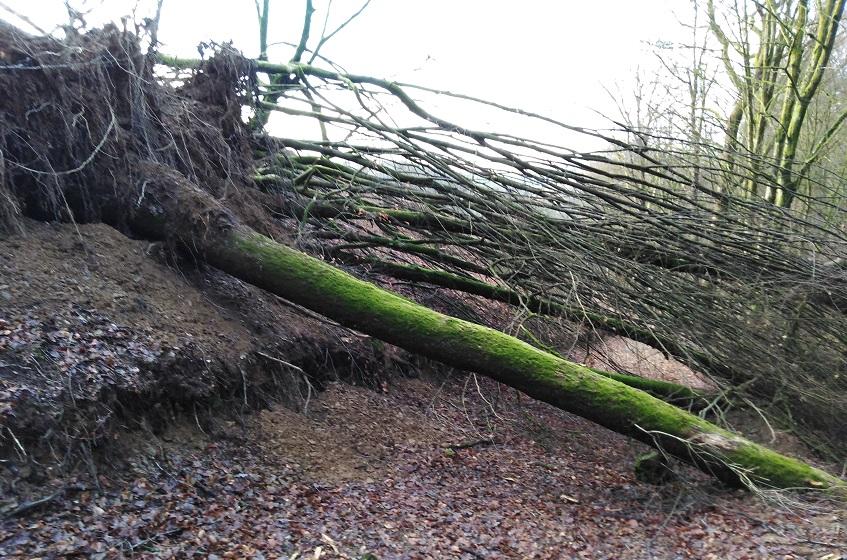 Wie auf dem Zuweg zum Westerwaldsteig bei Selbach-Brunken waren bzw. sind einige Waldwege beeinträchtigt. (Foto: Verwaltung)