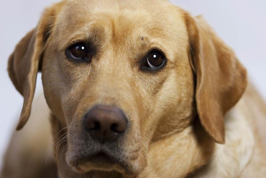Anmeldung von Hunden zur Hundesteuer