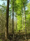 Lebensraum Laubwald: NABU Rennerod lädt zu Vortrag ein