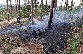 Waldbrand bei Niederdreis