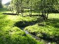 Bachlehrpfad Selbach: Einer der sch�nsten Wanderwege im Wisserland