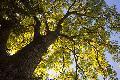 """""""Speckschichten aus CO2"""" – Wunderwerk Baum"""