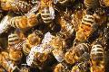 Vortrag: Vielfalt der Insektenwelt
