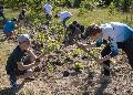 Fleißige Schüler/innen und Auszubildende sorgen für fleißige Bienen