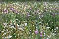 Lebensraum Garten – Einladung zum Natur-Garten-Kurs