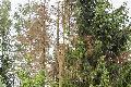 Der Wald von morgen in Rheinland-Pfalz