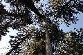 Der Forst schlägt Alarm - Frank Krause schildert die Situation in seinem Revier