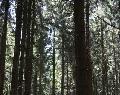 Beschlüsse des Wald-, Umwelt- und Klimaausschusses der Stadt Hachenburg