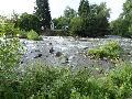 Wie steht es um unsere heimischen Fließgewässer?