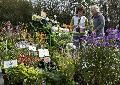Pflanzentauschbörse am Kräuterwind-Gartenmarkt