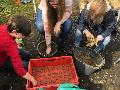 Mit Samenbomben gegen den Verlust der Artenvielfalt