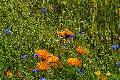 Stadtklima Bendorf: Bepflanzung der Zukunft und Biodiversität
