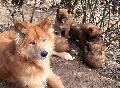Wolfswinkeler Hundetage waren als Internet-Seminar ein Erfolg
