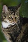 Katzenfänger in Hanroth unterwegs?