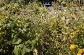 Klostergarten: Die Kräuterführungen finden wieder statt