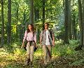 Förster zeigt Bedeutungswandel im Wald