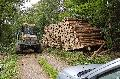 Nadelholz-Abschnitte günstig abzugeben