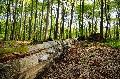Naturschutzinitiative (NI) lädt zum Wald-Sonntag im Nauberg ein